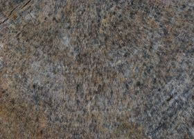 R. Dangerfield Texture Stock by redwolf518stock