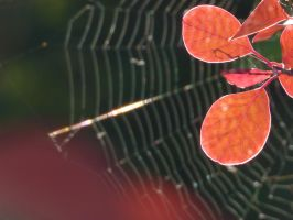 spider web by swandundee
