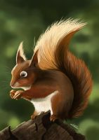 Red squirrel by ClaireLyxa