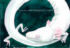 Olm ACEO by melanippos