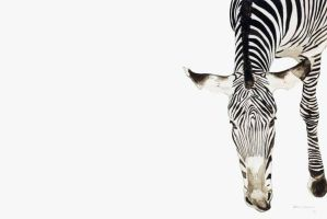 Zebra Watercolor by chahn19
