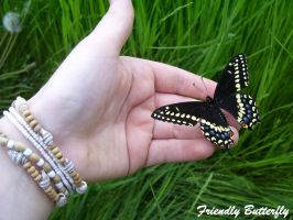 Black Swallowtail Butterfly by FriendlyButterfly