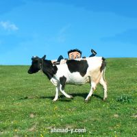 ride a cow by moslem-d