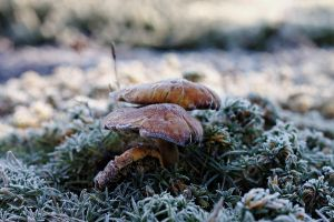 Frozen mushrooms by MrFotkerman