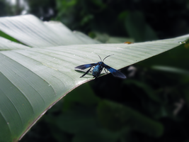 a blue bug of some kind by dragonsyth1