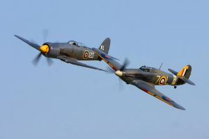 Naval Hawkers by Daniel-Wales-Images