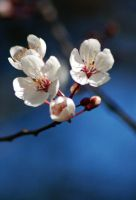 The Littlest Blossoms. by BeautifulFlower66