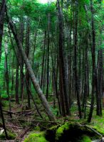 The Green Forest by SabrinaFranek