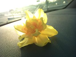 Daffodil by TheRedPlumBlossom