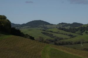 Napa Vinyards by Camel51