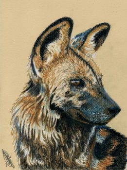 African Wild Dog by lonely-wolf-22