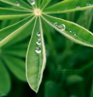 After Rain by andrewzus