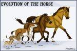 Horse evolution by pookyhorse