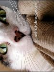 587 by evy-and-cats