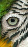 Parrot's Eye by MuniaElena