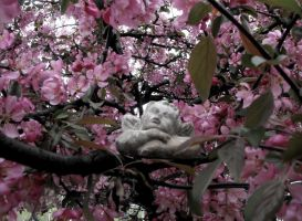 Crabapple dreams by Readmeabook21
