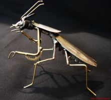 Small Mantis by metalmorphoses
