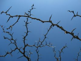 Thorny Branches Stock by Foxytocin