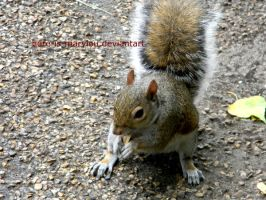 Squirrel by Here-is-MaryLou