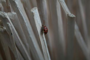Lady bug by Eliytres666