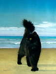 Cat on the Beach by hank1