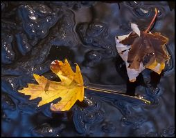 Leaves On Ice by bamako