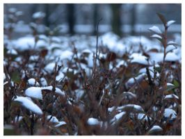 First snow in New Year by r3akc3