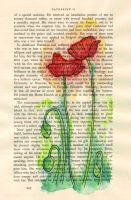Poppies by tpants
