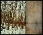 iPhoneography, Of Wood and Wall by Gerald-Bostock