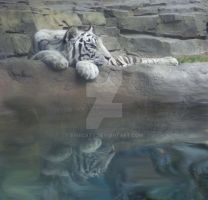 Reflecting Tiger by Eviecats