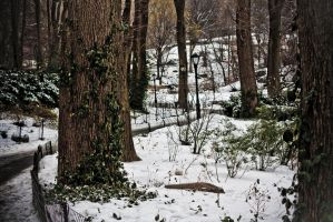 Snow Foliage by namespace