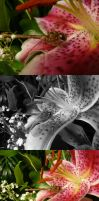 Stargazer Lily Stock 3 - with Dragonfly by Melyssah6-Stock