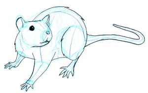 Animal Drawing: Rat by yunalee