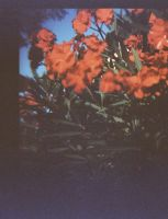 Lomo flowers by AnneSoLand