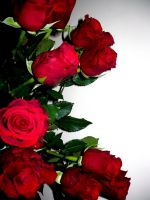 b-day roses III by HSM-Version-42a