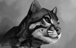 Fur Study by Omar-Dogan