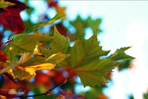 colorful leaves by Zlata-Petal