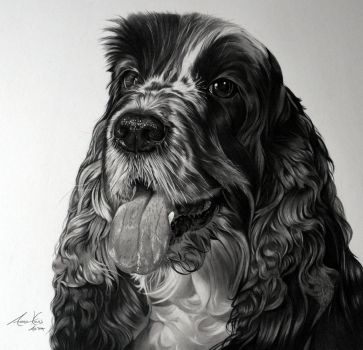 Commission - 'Max' the Cocker Spaniel by Captured-In-Pencil
