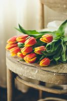 Tulips by absentiae