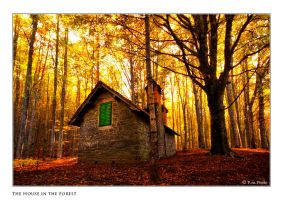 The House in the Forest by Marcello-Paoli