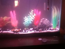 14 gallon fish tank by plusewolf