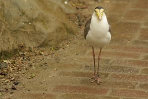 walking like a lady, but making ugly noise by marob0501