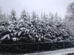 Snow-Covered.Trees by AdorableKitty08