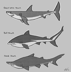 Warm up Sketches- Sharks by Atropicus