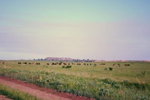 Grazing cows in retro style =) by croicroga