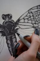 Stippled Cicada by TheButterflyBabe
