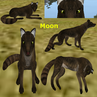 Moon Feral-Heart Adoption -Open- by AdoptablesOfAllKinds