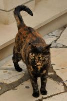 Korcula kitty 1 by wildplaces