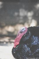 Turkey by Nash-Photography