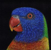 Rainbow lorikeet by shanskala